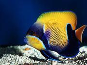 Чистка аквариумов, обслуживание