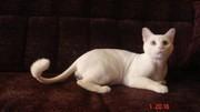 Стрижка кошек,  котов,  котят-любая сложность,  БЕЗ НАРКОЗА!