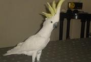 Замечательный попугай в качестве подарка.