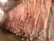 Мясо говядины оптом с доставкой по России