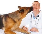 Ветеринарный центр «ВетЛекарь»