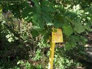 Лесной участок 7 сот., все коммуникации,  вблизи г. Домодедово