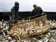 Продам рыбу,  морепродукты