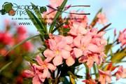Уход за садом,  газоном. Лечение,  подкормка или удаление растений.