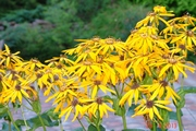 Цветы и растения для сада. Озеленение и благоустройство.