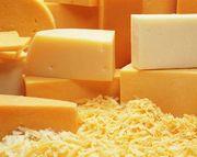 Сыр твердый оптом