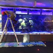 Мы занимаемся обслуживанием аквариумов,  океанариумов,  террариумов