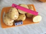 Картофель оптом в Москве и области