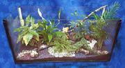 Уход за офисными растениями