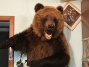 Барельеф медведя