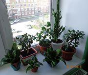 Продаю излишки ухоженных растений
