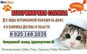 Ветеринарная служба на дому и в клинике !