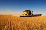 Завод по глубокой переработки пшеницы