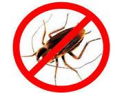 Мытищи уничтожение клопов тараканов химическим и термическим методом