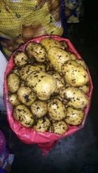 Продам картофель оптом со склада в Москве