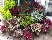 продам растения,  цветы