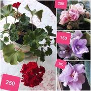 Цветы Раменское