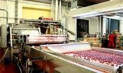 Фабрика производства замороженных фруктов и овощей Сербия